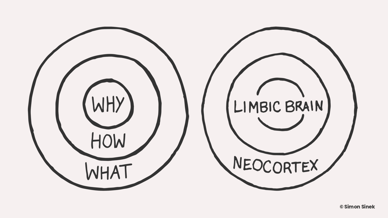 The Golden Circle - Limbic Brain